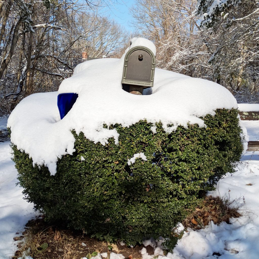 snow covered mail box in bush