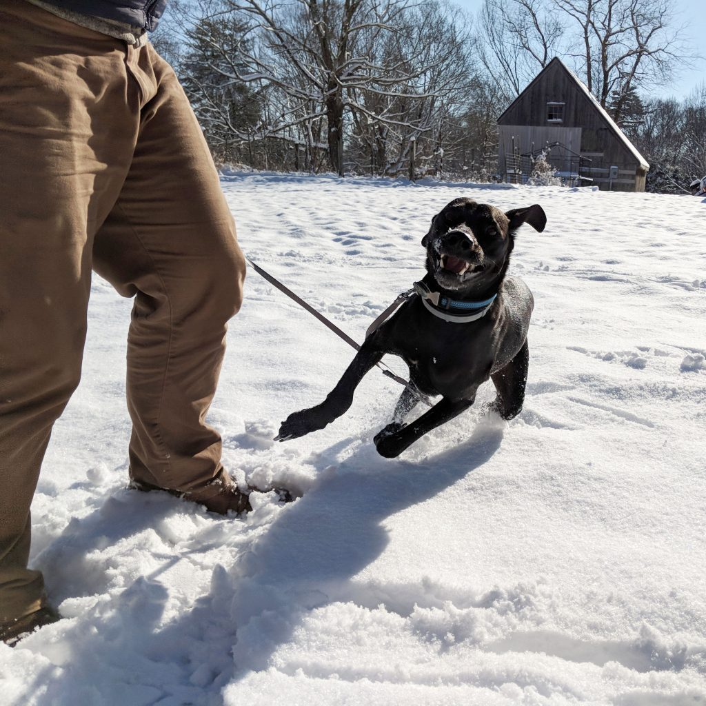 our dog Odin sprinting through the snow in Connecticut