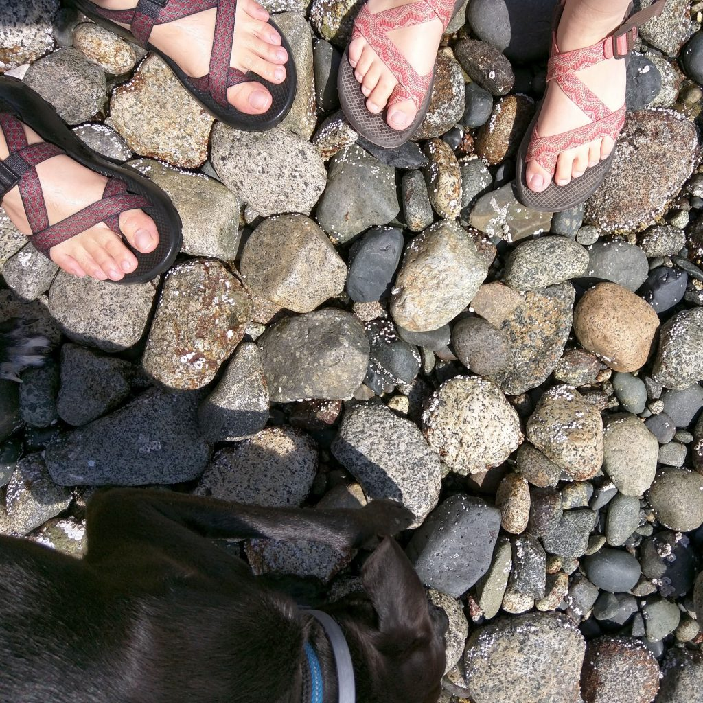 our feet and Odin sniffing around a pebble beach in British Columbia