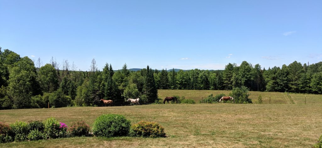 the horses at Cherry Valley Farm Airbnb