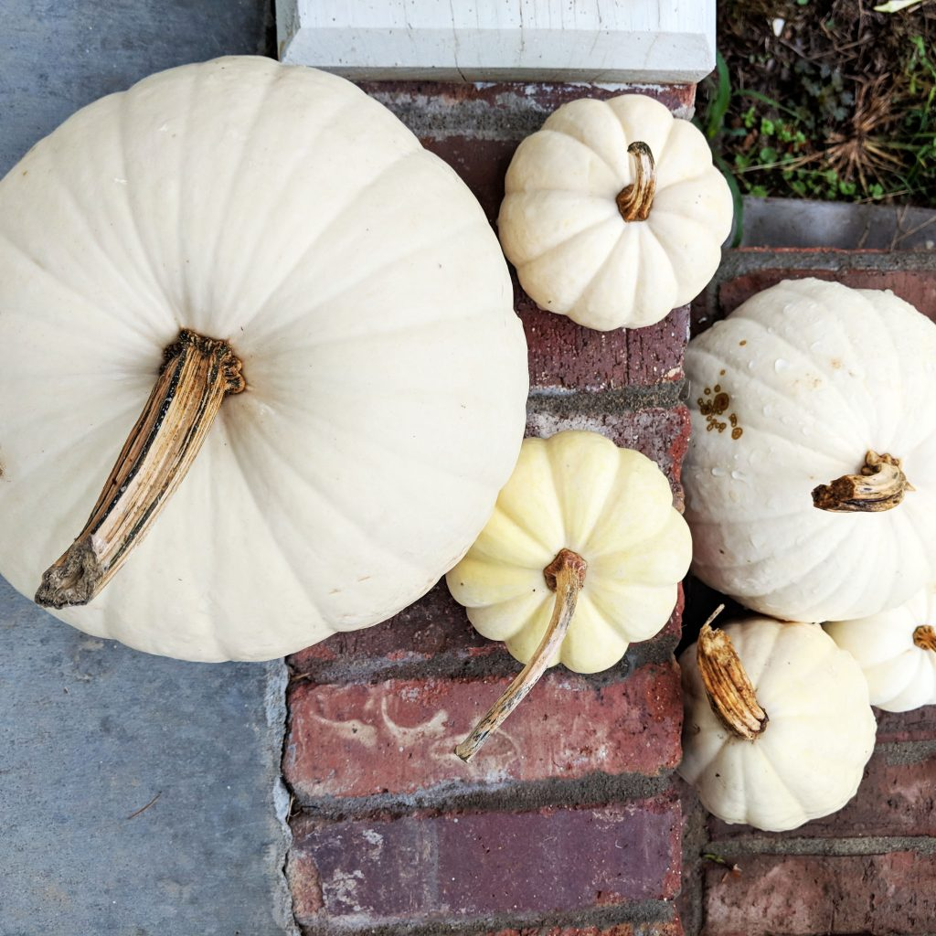 White pumpkins on the steps to the oak and hare farms Tennessee Airbnb