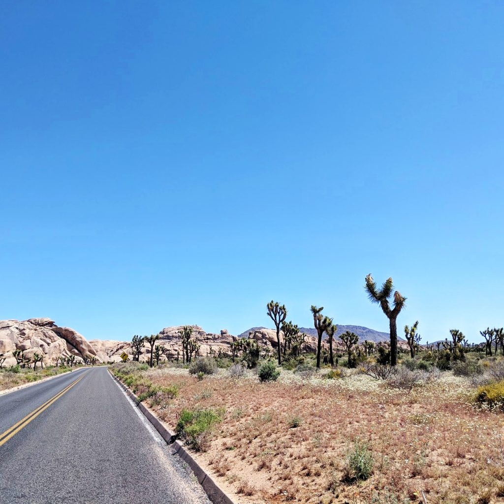 road in Joshua Tree National Park