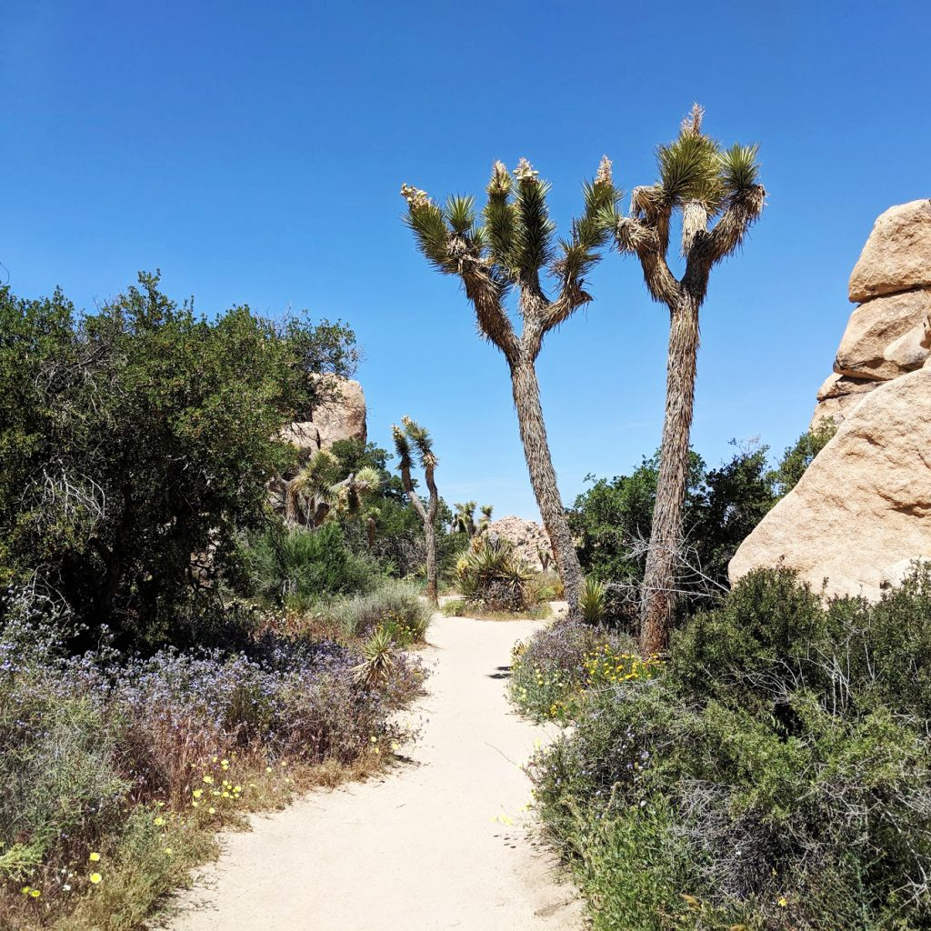 path in Joshua Tree National Park
